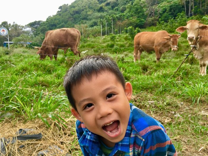 Portrait of boy against cows grazing on grass