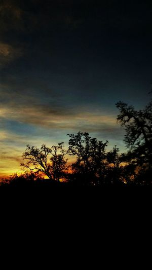 Sunset Tree Nature Silhouette Beauty In Nature Landscape Scenics Outdoors Dramatic Sky Mendocino County Mountain Beauty Tranquility Tranquil Scene Sky Nature Orange Color Beauty In Nature No People Lifestyles End Of The Day Investing in Quality of Life Inlove Colour Your Horizn The Great Outdoors - 2018 EyeEm Awards