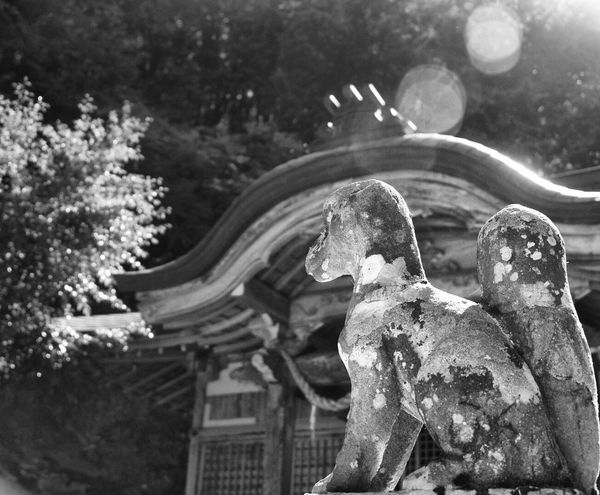 Shinto Shrine Japan Statue Close-up Kinosaki Blackandwhite