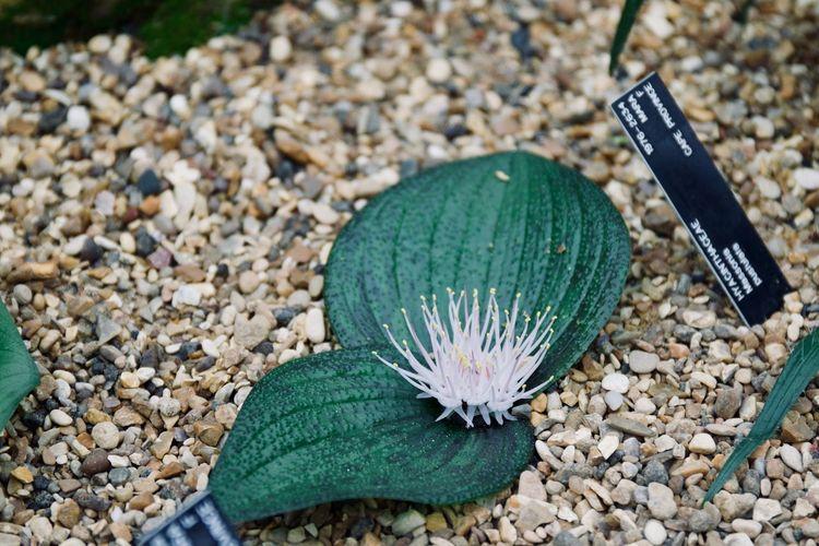 Royal Botanic Gardens Kew Gardens London England United Kingdom Nature Close-up No People Plant Growth Beauty In Nature Macro Plant Botany Botanical Garden Botanical Flowering Plant Green Color Flower Flower Head