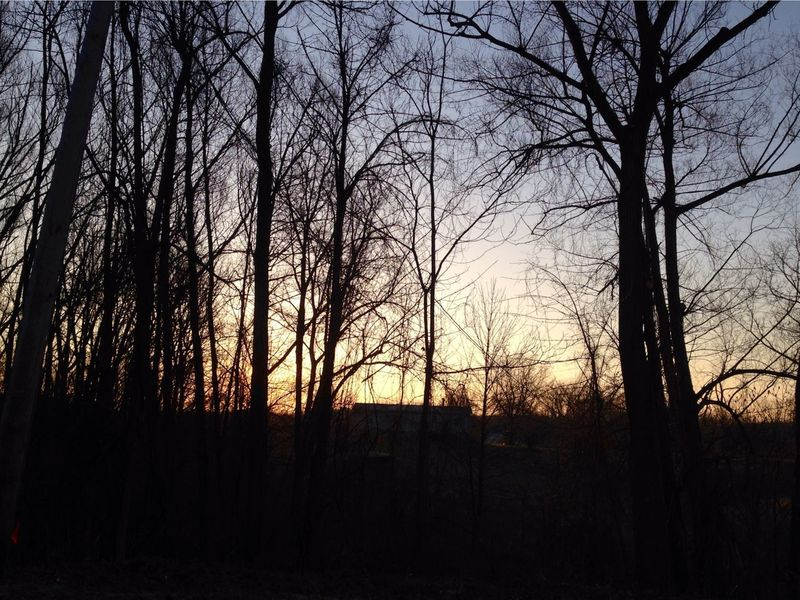 No leaves and it's Easter StreamzooPics Streamzoofamily Streamzoo Streamzooers