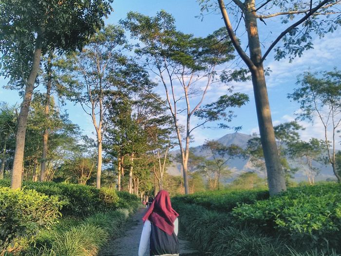 Rear view of woman wearing hijab while standing in forest