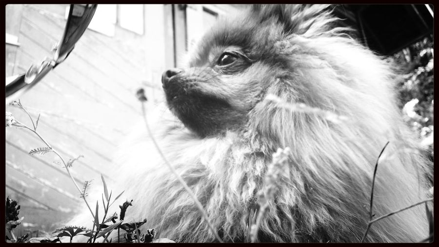 My dog is waiting for us. Black and white photography, taken with samsung galaxy s4.