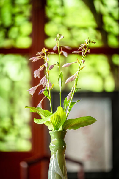 im chinesischen Teehaus Beauty In Nature Close-up Day Flower Flower Arrangement Flower Head Flowering Plant Focus On Foreground Fragility Freshness Green Color Houseplant Nature No People Plant Plant Part Vase