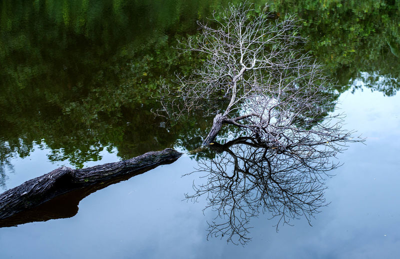 nature background _lake Tree Water Plant Reflection Tranquility Lake Nature No People Branch Beauty In Nature Tranquil Scene Day Waterfront Bare Tree Forest Growth Scenics - Nature Trunk Tree Trunk Outdoors