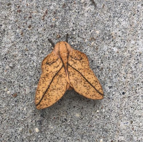 Contrast! Winged creature.😐. !& Leaf Autumn Plant Part