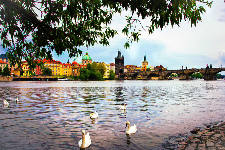 Animal Themes Animals In The Wild Architecture Bird Building Exterior Built Structure City Cityscape Cityscapes Day Nature No People Outdoors Prague River Riverbank Skyline Taking Photos Tranquility Travel Destinations Tree Water Water Bird Waterfront Wildlife