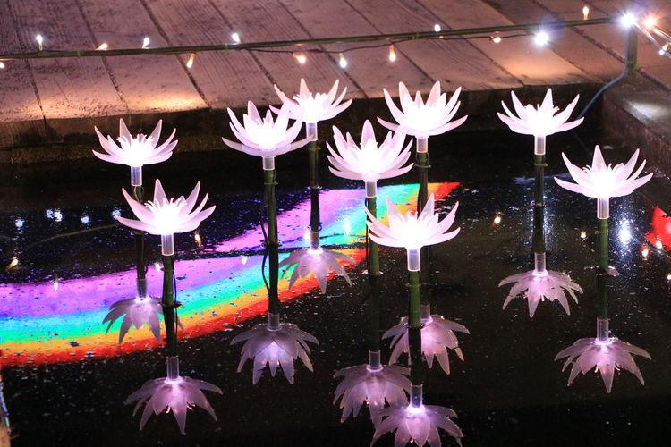 Asikaga Flower Park Illuminations Lotus Flowers