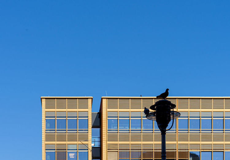 Low angle view of bird on building against clear sky