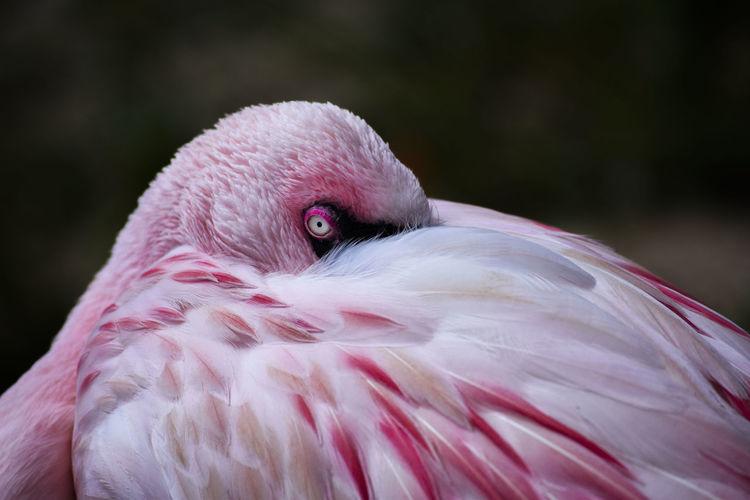 Close-up of pink bird