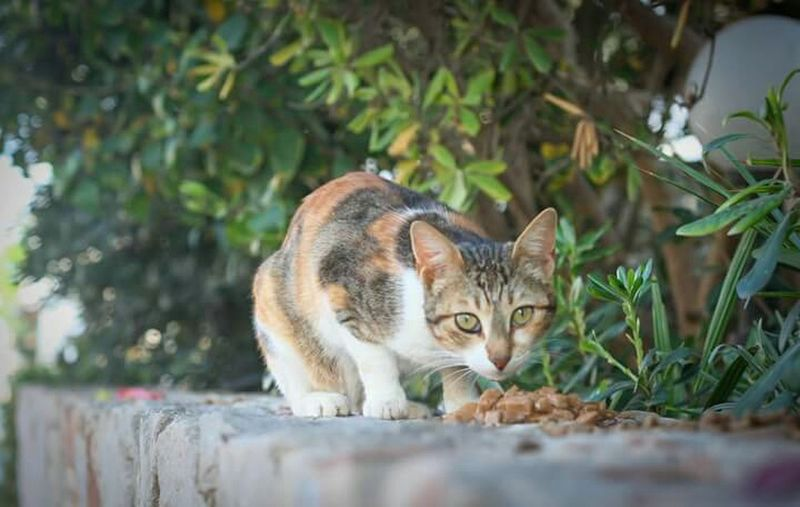 Cat eating, Homeless Cats Looking At Camera Lookingup Food Catfood Animals Animal Photography Animal_collection Animal Love Cat Eating