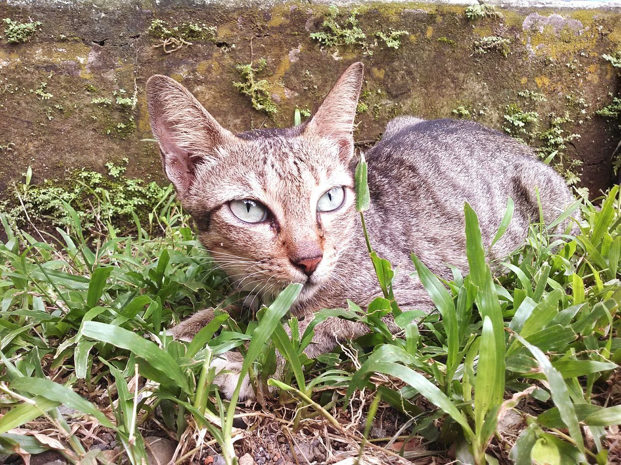 domestic cat, looking at camera, pets, portrait, animal themes, domestic animals, one animal, feline, mammal, plant, whisker, nature, day, growth, no people, flower, outdoors, leaf, alertness, sitting, close-up