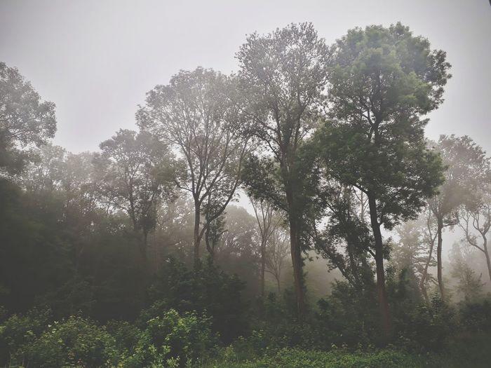 Woods Trees