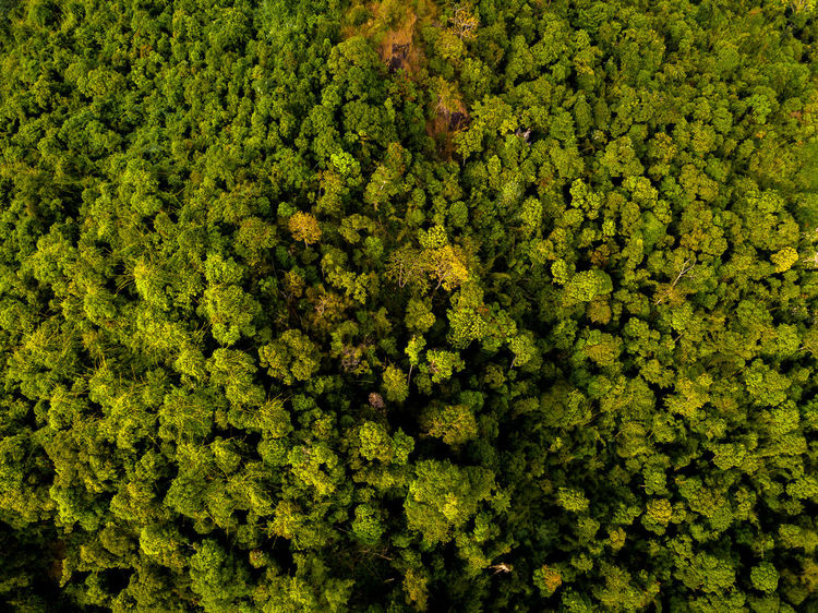 DJI X Eyeem Drone  Backgrounds Beauty In Nature Day Dronephotography Freshness Full Frame Green Color Nature No People Outdoors Skypixel