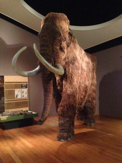 Mammuth Animal