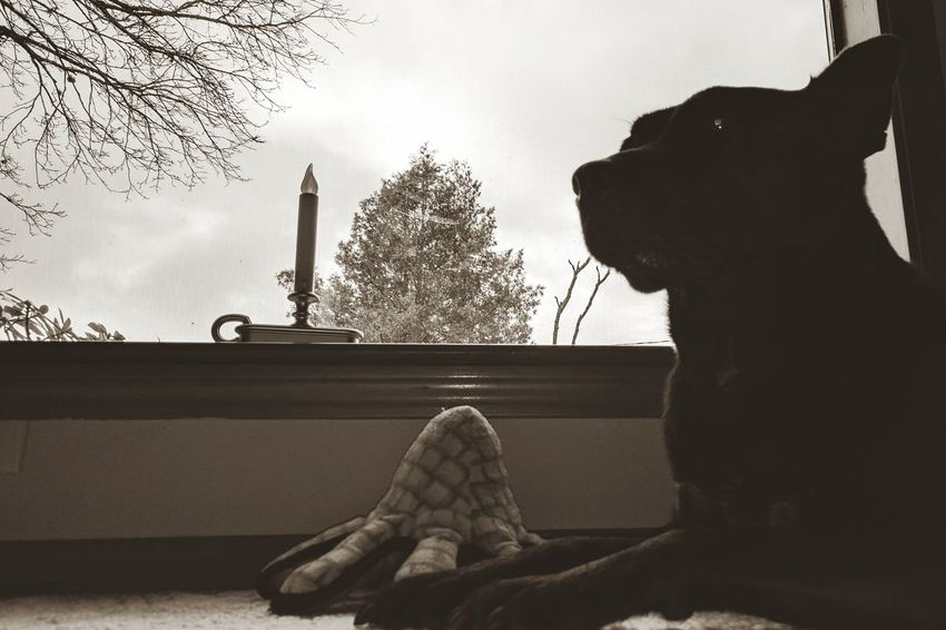 Dog Dog Toy Window Looking Through The Window Cute Pets Cute Dog  Black Lab Playful Car Sky Cloud - Sky One Person Adult Men Tree People Adults Only Outdoors One Man Only Day Black & White Blackandwhitephotography B&w Pet Portraits