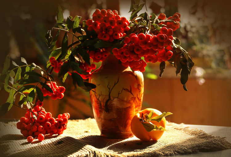 Autumn has come ... Autumn colors Rowanberry Autumn Bouquet Beauty In Nature Day Focus On Foreground Freshness Fruit Fruits Of Autumn Mountain Ash Nature No People Plant Red Shadow Still Life Sunlight
