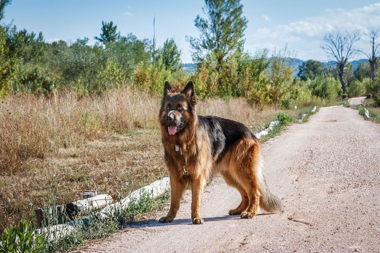 View of a dog standing on road