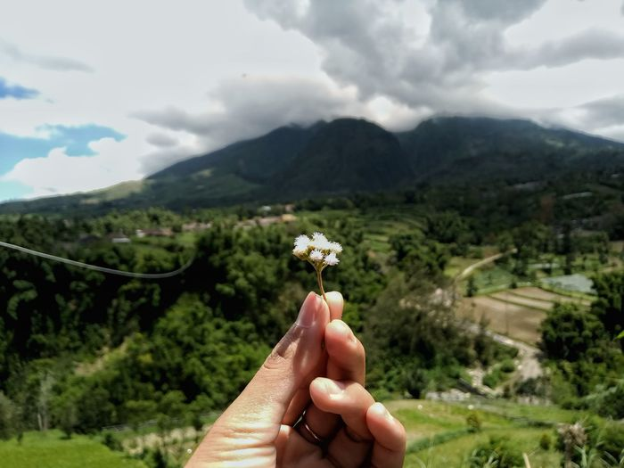 Cropped hand holding flower against mountains