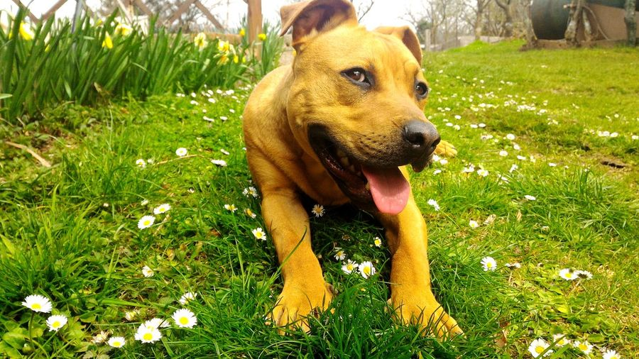 Dog❤ Dog Lover Dog Portrait Dog Life Sunlight Outdoors Day Domestic Animals Pets One Animal Dog Grass Nature No People Sticking Out Tongue Close-up Slovenia ❤ Springtime Tranquility Pet Photography
