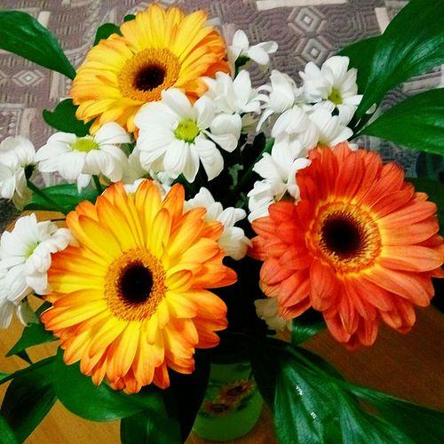 КисаКот Мария Николай Мое волшебство Flower Day