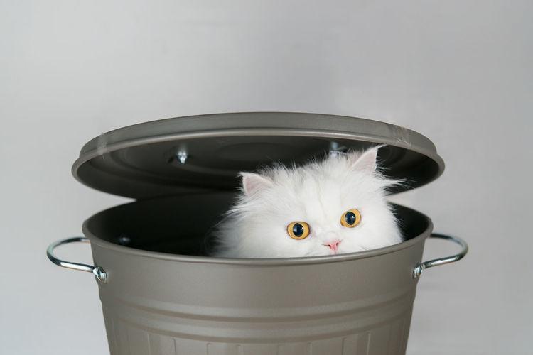 Bucket Cat