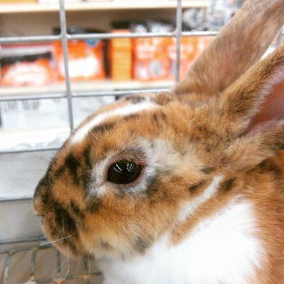 Just chillin Cute Rabbit Chillin LovinLife