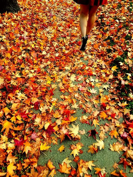 Autumn One Woman Only Beauty In Nature Legs Reddress Curves And Shapes EyeEmNewHere Leaves 🍁