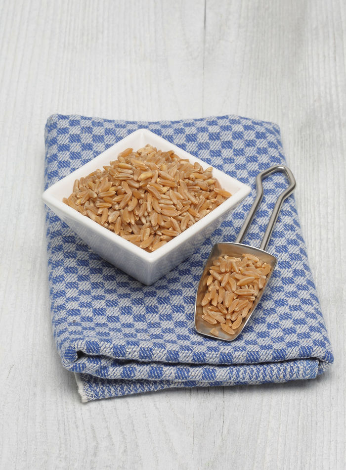 cereal Kamut, Khorasan wheat, Triticum turgidum x polonicum Agriculture Cereal Culture Food Food And Drink Healthy Eating High Angle View Indoors  Kamut, Khorsan Still Life Triticum
