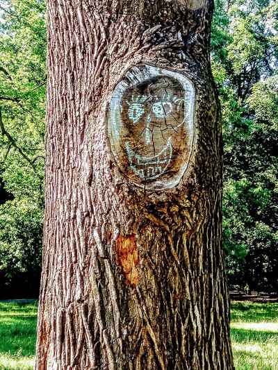 face in a tree trunk Outdoors Nature Portrait Parks And Recreation Face In The Tree Funny Moments Funny Pics Park Live  Parks In Berlin