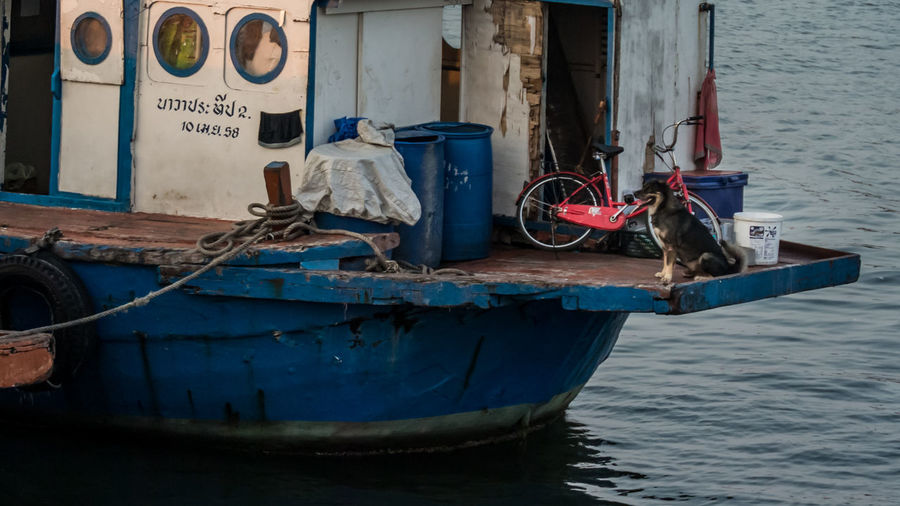 Dog in boat Bicycle Boat Chonburi Day Dog Fisherman Boat Life Mode Of Transport Nature Nautical Vessel No People Outdoors Rippled Rope Sea Ship Ships⚓️⛵️🚢 Sky Transportation Transportation Showcase : June