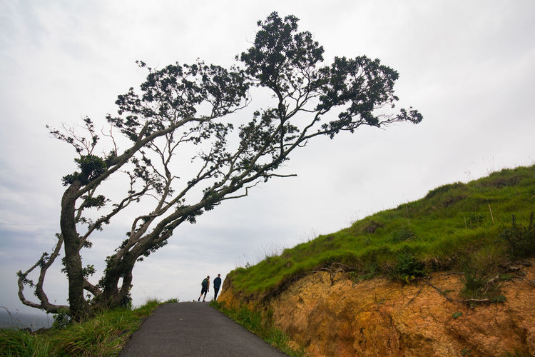 Big Leaning Tree. Green Leaning Trees Nature Photography Path Beauty In Nature Branch Cloud - Sky Day Growth Journey Landscape Leaning Tree Nature Outdoors People People Walking  Road Scenics Sky Small People Small People In Big Places The Way Forward Tree Two People Alone In Nature Walking People