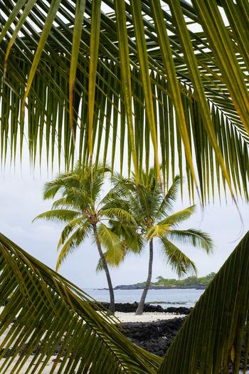 Palm tree leaves against sky