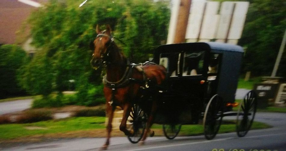 Photography In Motion Photos By Jeanette Lancaster County Pennsylvania Horse And Buggy Amish Amish Country Lancaster Running Horses Need For Speed Welcome To Black Long Goodbye