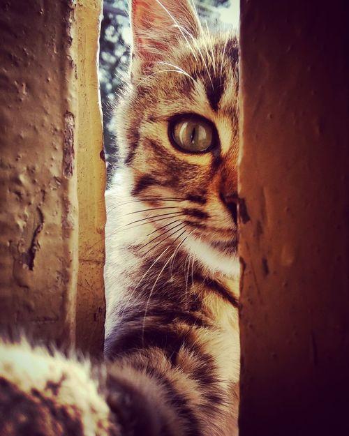 Cat Cats Greeneyes :) Leopar Summer ☀ Lion