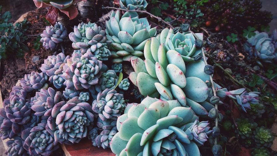 An Encounter with Life Growth Life Plant Life Succulent Plants And Flowers Freshness Beauty In Nature Growth In Nature Garden Morning Garden Photography Day Succulent Plant Plant Abundance Nature Beauty In Nature Close-up Outdoors Botany