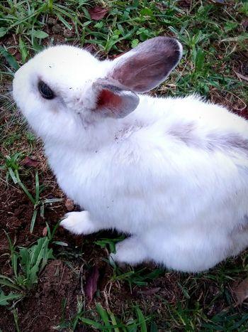 Follow the white rabbit Rabbit Downtherabbithole Aliceinwonderland