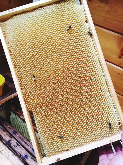 High angle view of bee on floor
