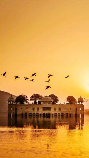 EyeEm Selects Animals In The Wild Nature Sky Jalmahalpalace