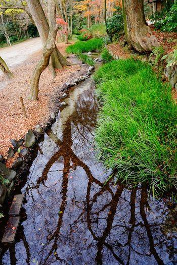 2016 Forest Growth Japan Kamigamo Jinja Kamigamo Shrine Kyoto Leaf Nature Outdoors River Shrine Tranquility Tree Water 上賀茂神社 京都 賀茂御祖神社 World Heritage