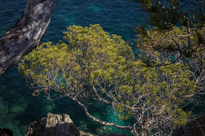 Beauty In Nature Cliffs Cliffside Close-up Down Sendrom Down Side Downside  High Angle View Mallorca Mediterranean  Nature No People Outdoors Peguera Rock - Object Rocks Stone Material Tree Tree Trunk Water