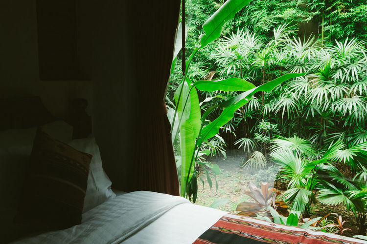 Potted plant on bed at home
