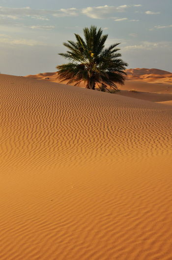 Desierto Desert Landscape Desert Beauty Deserts Around The World Desert Maroc Morocco Marruecos Viento Wind Arena Sand Sand Dune Dunes Dunas Dunescape
