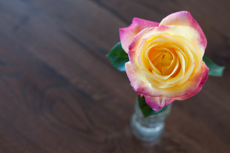 Meilland Wood Yellow Flower Beauty In Nature Bottle Close-up Flower Flower Head Flowering Plant Focus On Foreground Fragility Freshness High Angle View Inflorescence Nature No People Petal Pink Color Plant Rosé Rose - Flower Vase Of Flowers Vulnerability  The Still Life Photographer - 2018 EyeEm Awards