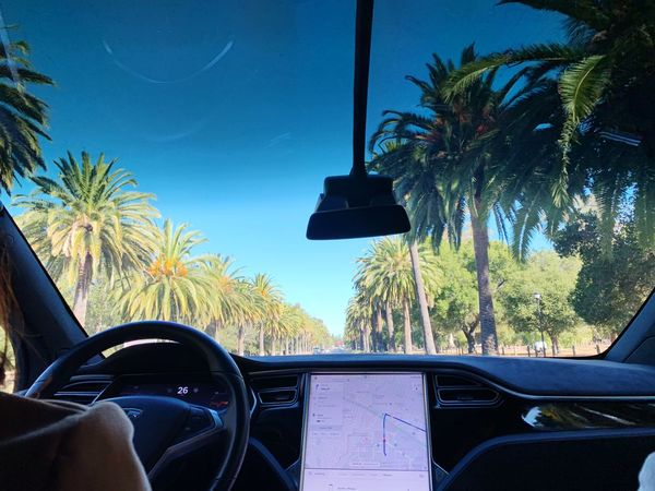 Palm Drive @ Stanford University Modelx Tesla Tree Plant Car Sky Vehicle Interior Mode Of Transportation Motor Vehicle Glass - Material Windshield Transparent Palm Tree Car Interior No People
