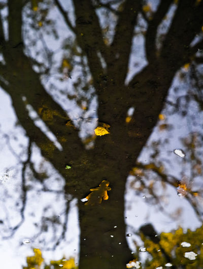 Autumn Reflection Beauty In Nature Branch Growth Leaf Nature No People Outdoors Reflection_collection Tree Water