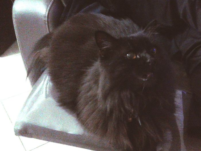 Miaou Black Cat I Love My Cat Catoftheday Catinstagram Cat♡ Cat Lovecats Animals Goodnight