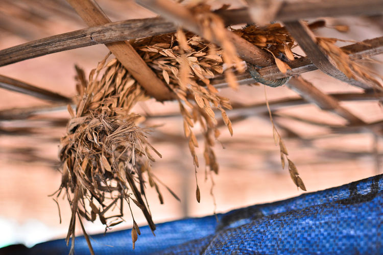 Low angle view of dry twigs on wood