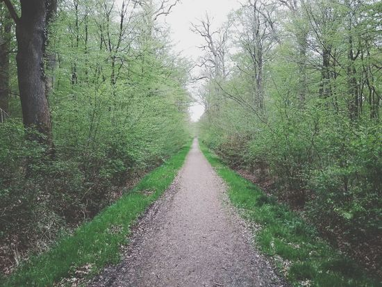 The Road Ahead for 2016?? Happy New Year Everyone. · Germany Just Making Things Up Not In The Mood From The Archives Forest Road Path Trees Hugging Trees Green Spring Yeah