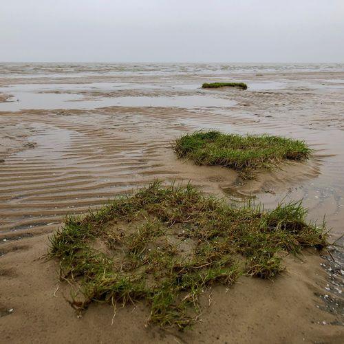 Wattenmeer Watt